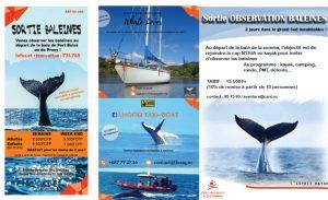 Depart aux baleines 300x183 Depart aux baleines