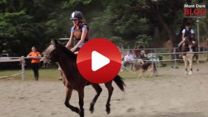VIDEOS. Club Hippique La Cravache Mont Dore 1 300x169 VIDEOS. Club Hippique La Cravache Mont Dore 1