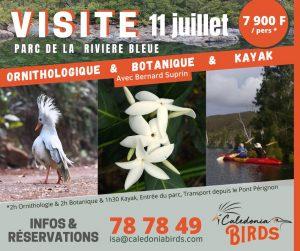Visite Ornithologique avec Bernard Suprin 300x251 Visite Ornithologique avec Bernard Suprin